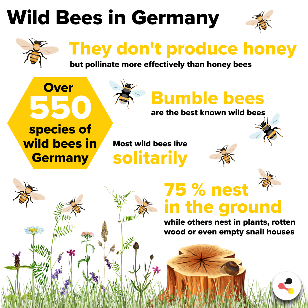 Over 550 species of wild bees in Germany