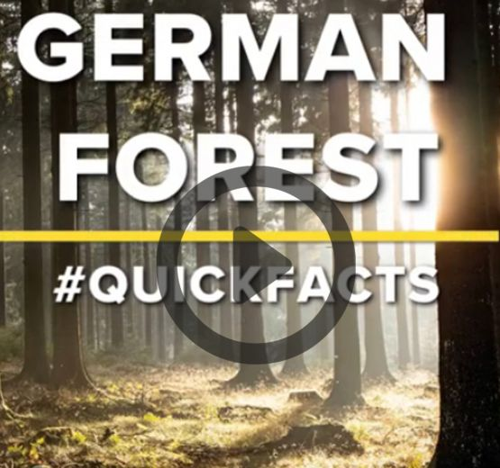 #Quickfacts: German forest