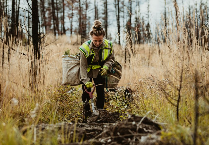 Student plants trees during an internship in the forest.