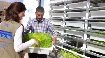 Hydroponics Algeria: islands of green in the desert