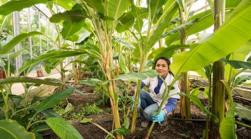 Student in a greenhouse at Hohenheim University