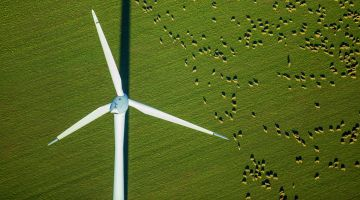 Sustainable energy: wind turbine on sheep pastures in Germany