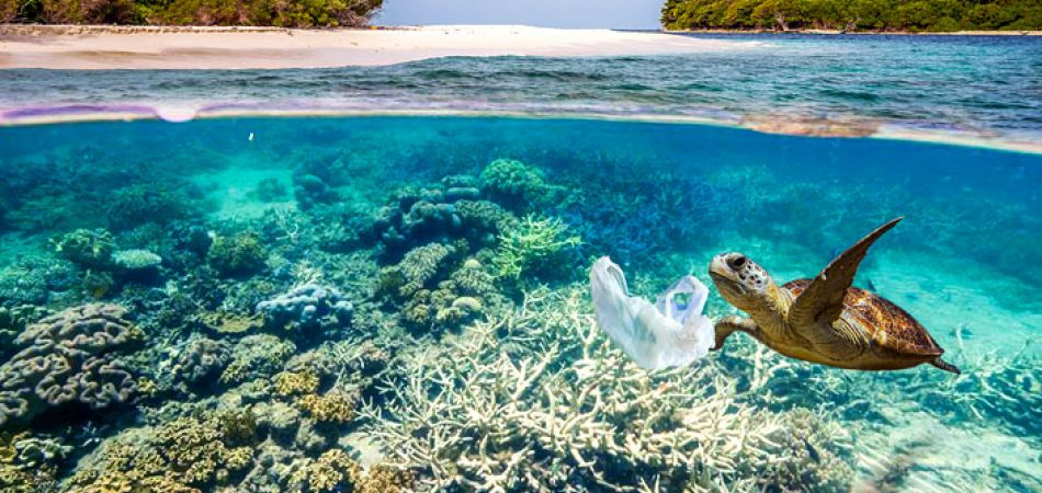 freeing the ocean from garbage initiatives from germany