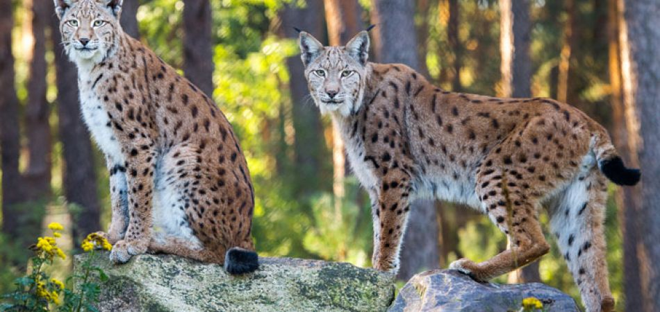rare wild animals in germany
