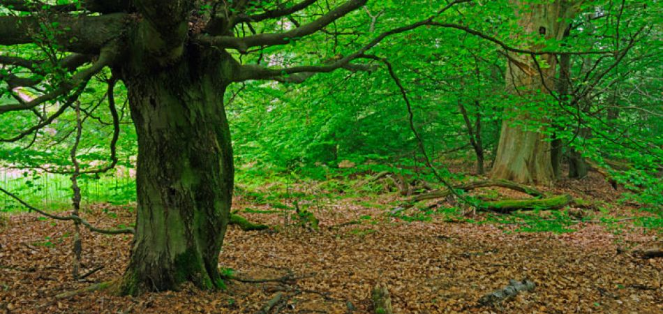 عالم الغابات الرائع Wunderbare_welt_des_waldes_baum_pa_25241596_a