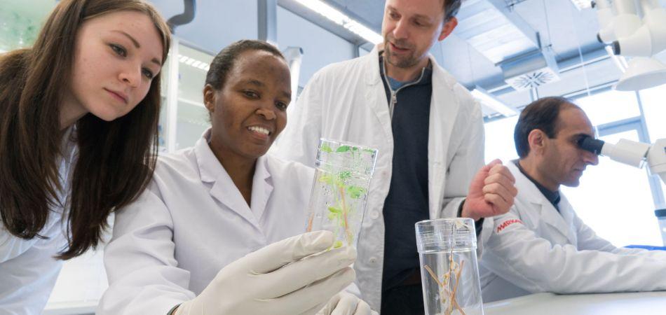 La Universidad de Hohenheim investiga sobre seguridad alimentaria.