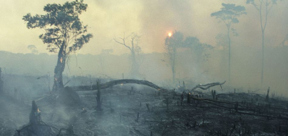 Huge forest fires in the Amazon