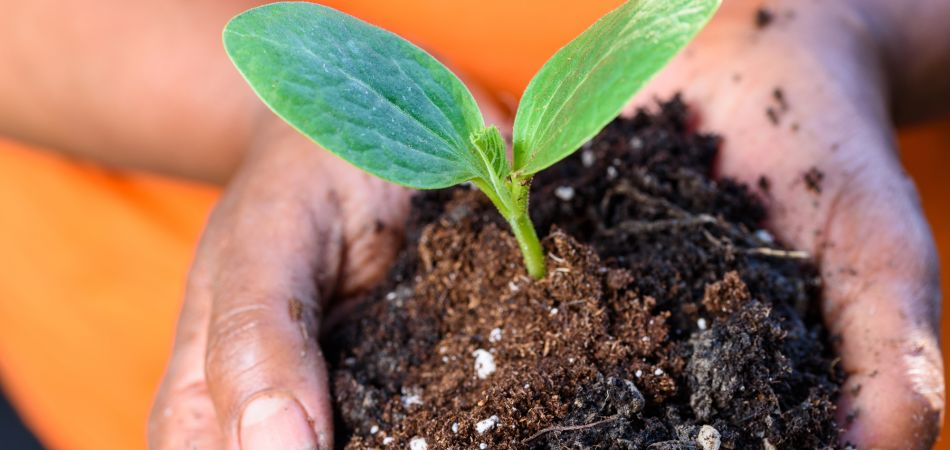 Good soil, strong plants: Germany is acting to protect our soils.