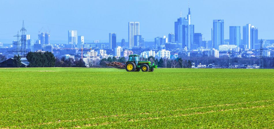Attractive contrast: farming in front of the Frankfurt skyline