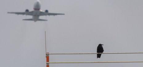 Tactics against bird strike