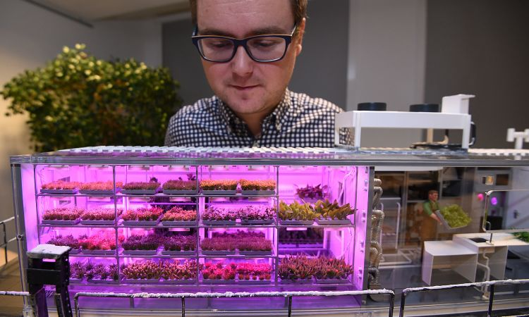 Eden-ISS: The aerospace engineer in front of a model of the greenhouse.