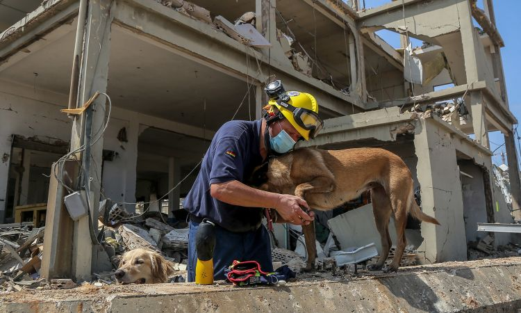 The sniffer dogs provide valuable help when searching in the rubble for survivors.