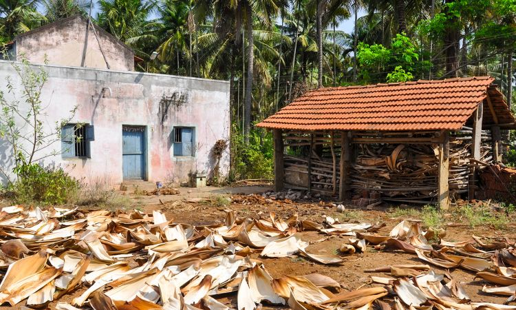 The raw material: leaves that have fallen off the areca palm