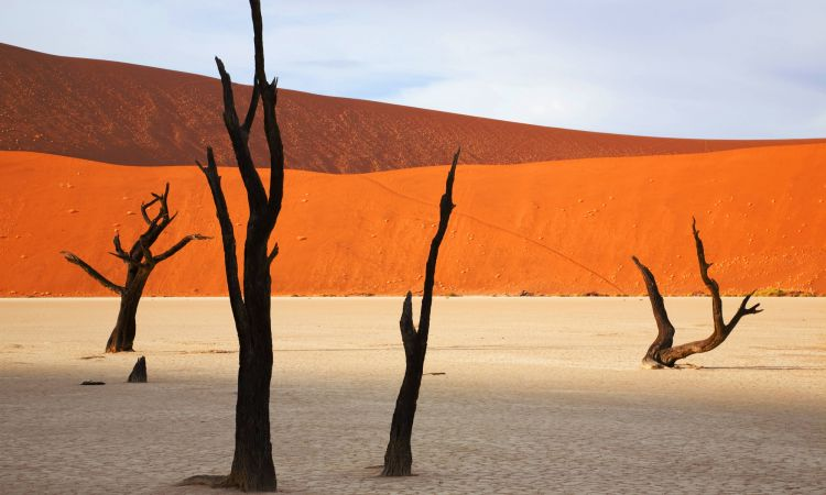 A nice theme, but a sad truth: Advancing desertification in Africa