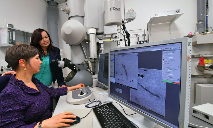 Researchers using a special microscope at the Fraunhofer Institute in Halle to look for toxic protein structures.