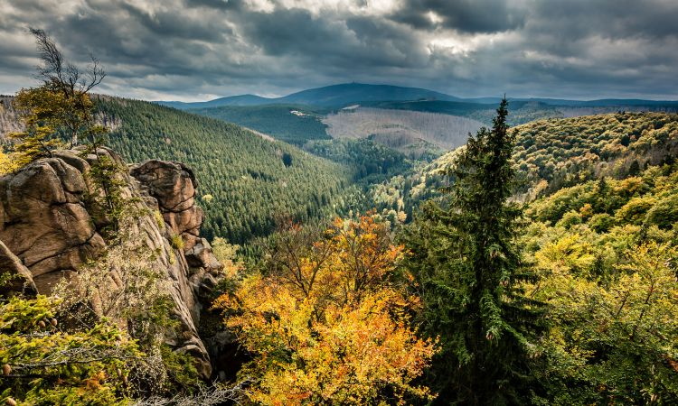 Le parc national du Harz