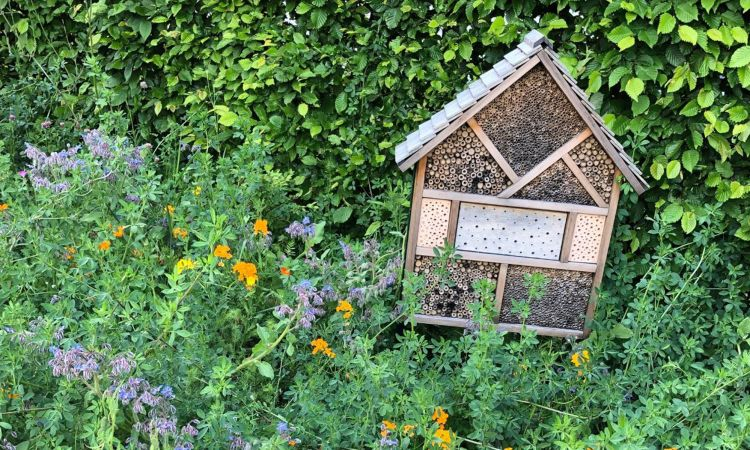 Bee hotels are made of clay, stone or wood. Tubes that have already been used are cleaned by the bees themselves and re-covered.